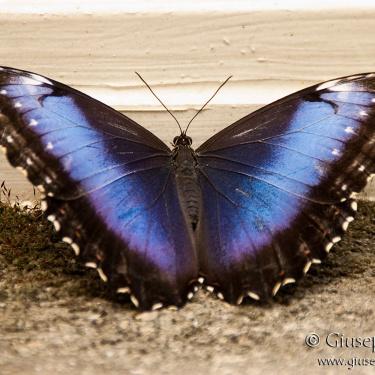"""""""Un tè con le farfalle"""""""