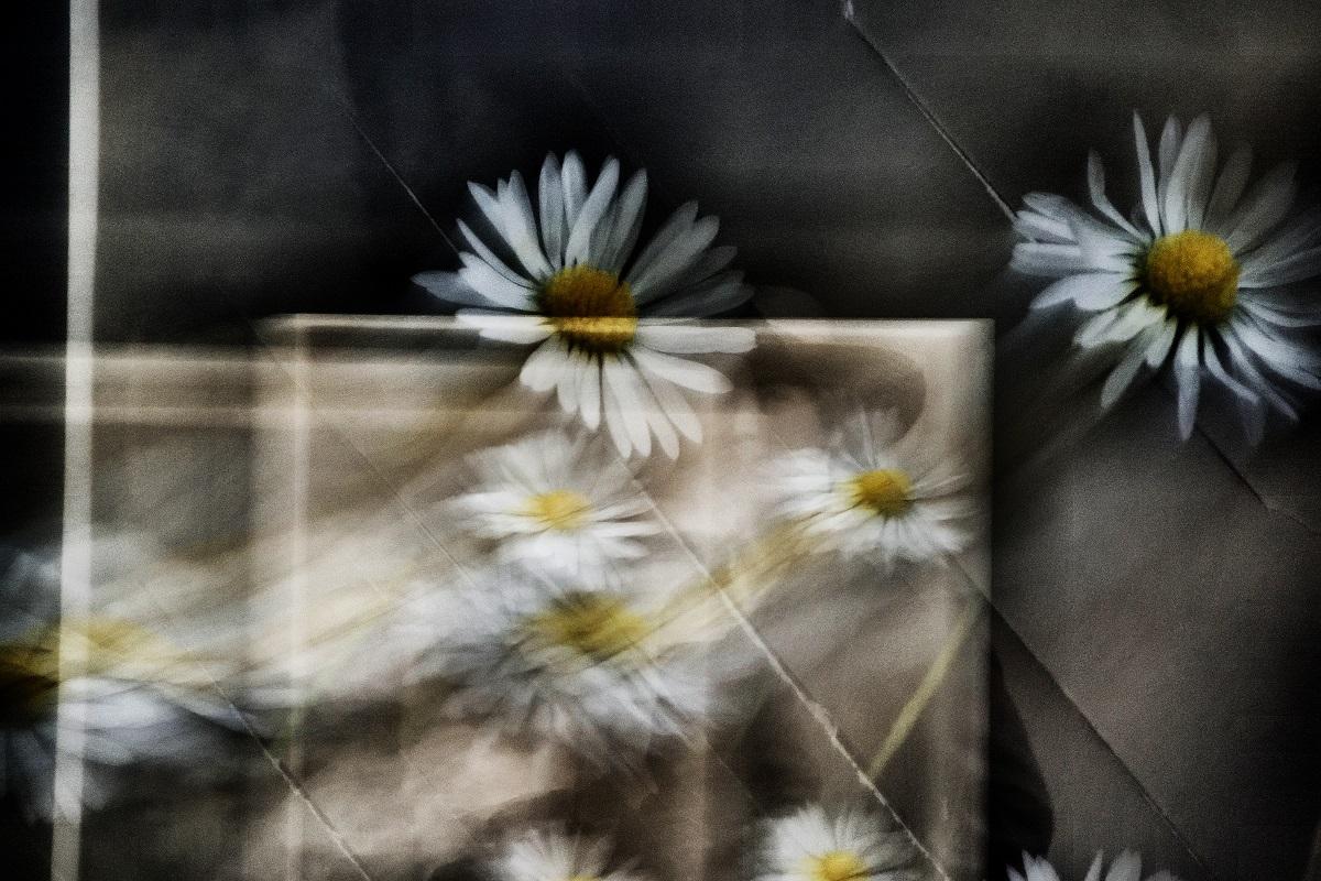 """White and yellow dream, There are always flowers for those who want to see them. Ci sono sempre fiori per coloro che vogliono vederli. """"Henri Matisse"""""""