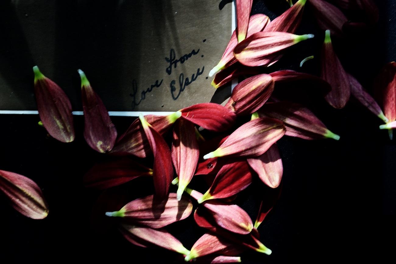 Scars of your love, Quello che un tempo era un vivace fiore rosso ha iniziato a perdere i suoi petali, uno alla volta lasciando un corpo nudo davanti la realtà. Alcuni petali sono volati via ammucchiandosi in un
