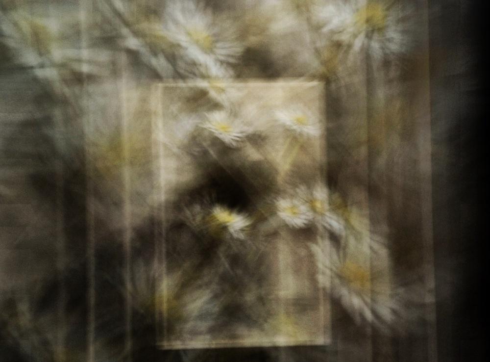 White and yellow dream